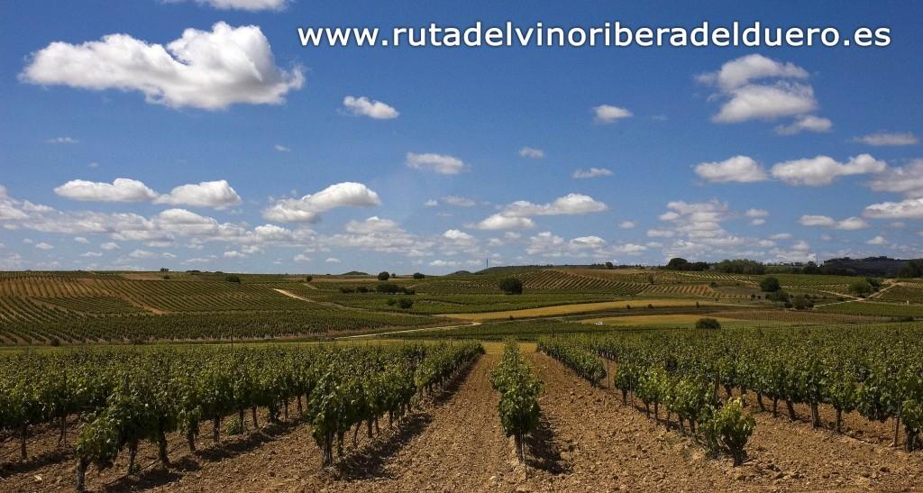 Ruta-del-Vino-Ribera-del-Duero